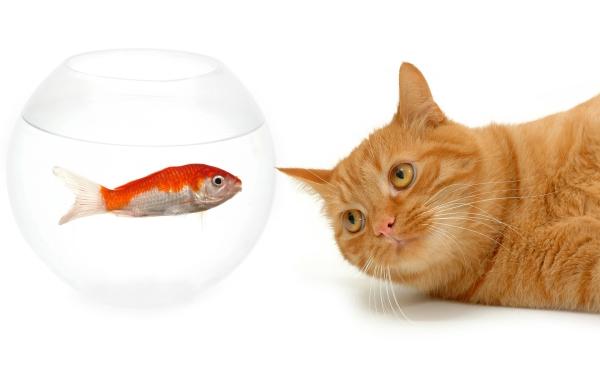 Geração de leads: é mais fácil vender o seu peixe para quem está interessado nele.